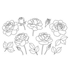 Contoured simple rose flowers buds and leaves set vector