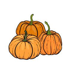 Decorative orange pumpkins hand drawn sketch vector