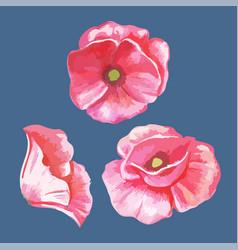 Flowers tulips vector