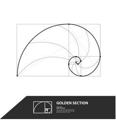 Golden ratio for creative design section vector