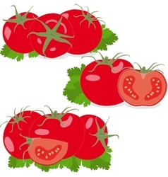 Tomato Set tomatoes and parsley leaves Isolated vector