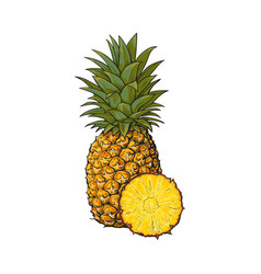 whole unpeeled uncut vertical pineapple and vector image