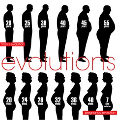 men obesity evolution and pregnancy stages vector image