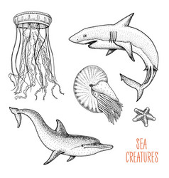 fishes or sea creature dolphin and white shark vector image vector image