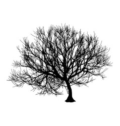 black dry tree winter or autumn silhouette on vector image