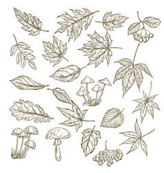 set hand drawn leaves berries and mushrooms vector image