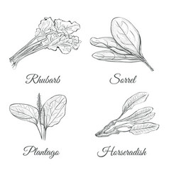 Set of plants sketch vector