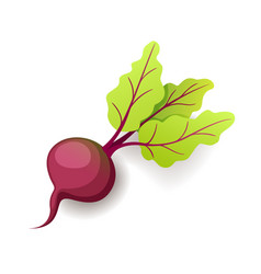 sweet fresh beet with green leaf icon isolated vector image