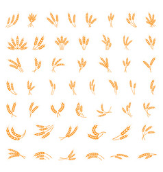 symbols for logo design wheat agriculture corn vector image
