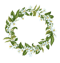 wreath in vintage style with citrus flowers in vector image