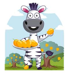 Zebra with mangos on white background vector
