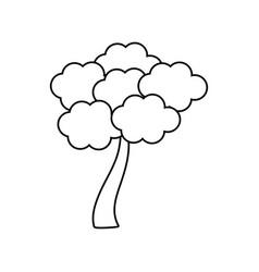 outlined tree sakura japanese vector image