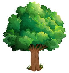 A tree at the forest vector image vector image
