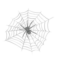 a spider weaves a spider web vector image