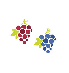 red grapes and blue grapes vector image