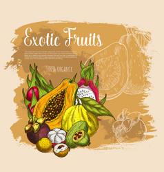 sketch poster exotic tropical fresh fruits vector image