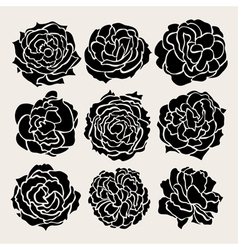decorative roses set vector image