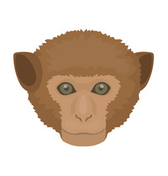 monkey icon in cartoon style isolated on white vector image vector image