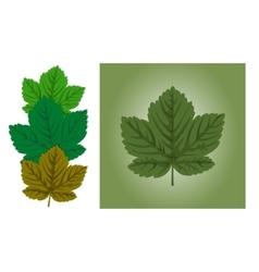 Maple leaf background vector image