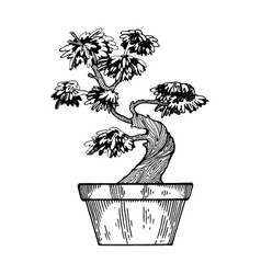 bonsai tree engraving vector image
