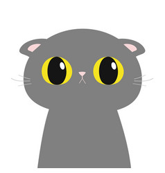British shorthair cat round head face body cute vector