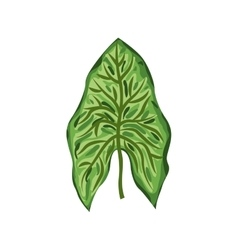 Green leaf in roped form vector