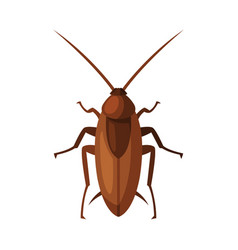 Red cockroach insect pest control and vector