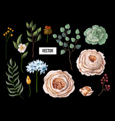 set of peachy english roses vector image