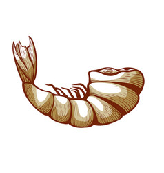 shrimp meat icon small shellfish body for food vector image