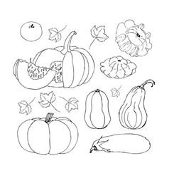 Sketch pumpkin doodle pumpkins hand drawn vector