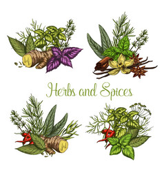 Spices and herbs seasonings sketch vector