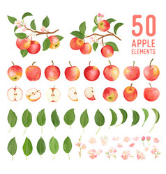 Watercolor elements apple fruits leaves vector