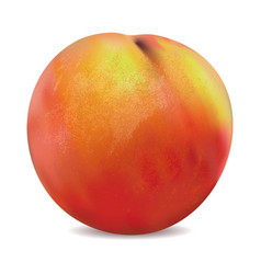 apricot fruit isolated on the white background vector image