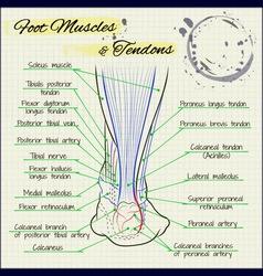 back of a human foot vector image vector image