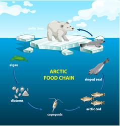 Circle arctic food chain vector