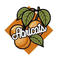 color vintage fruits emblem vector image