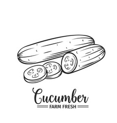 hand drawn cucumber icon vector image