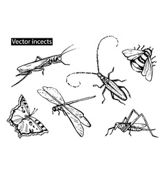 insects sketch decorative icons set with dragonfly vector image