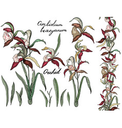 isolated orchid cimbidium on white different vector image