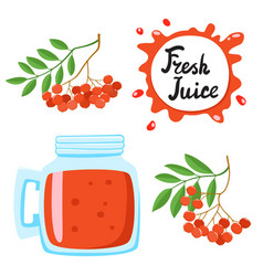 Juice with ashberry in a glass bank vector