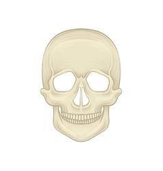Structure of human skull - bony part of head vector