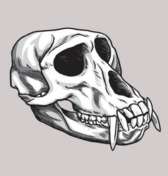 monkey skull hand drawn drawing vector image