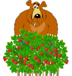 bear and raspberry vector image vector image