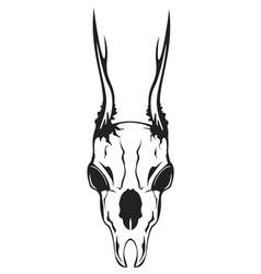 skull roe vector image vector image