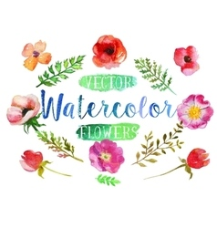 watercolor aquarelle flowers and leaves vector image