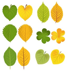 Autumn leaves green and yellow vector image