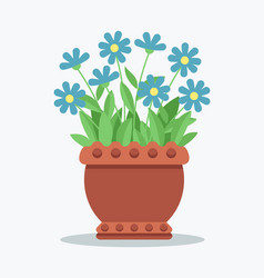 House plant with tender blue blossom in clay pot vector