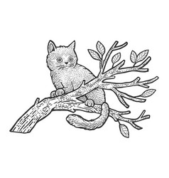 Kitten sits on a tree sketch vector