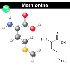Methionine proteinogenic essential amino acid vector image