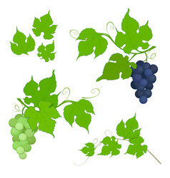 red and white grapes bunch with leaves vector image vector image